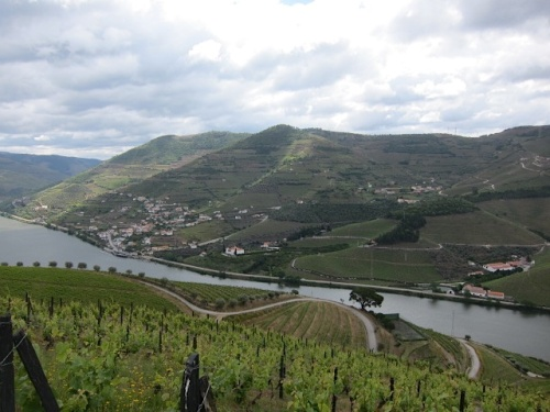 Port vineyards on the Douro River