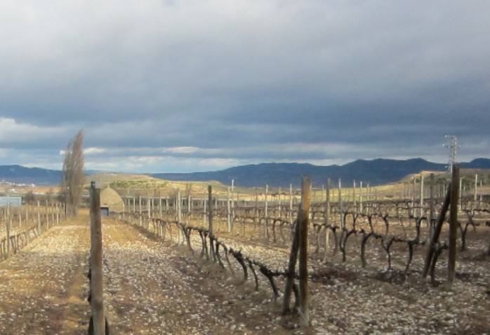 Rocky soils of Bodega Beronia in Rioja