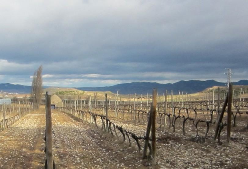 Rocky soils of Bodega Beronia in Rioja