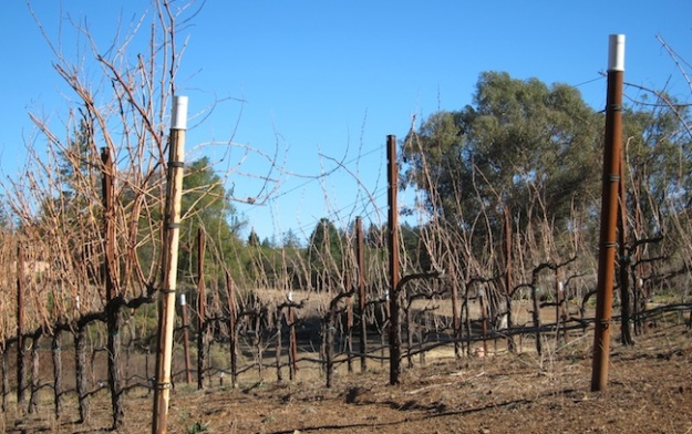 Ladera Howell Mountain vineyards in January
