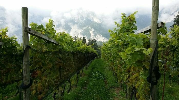 Tiefenbrunner Hofstatt Vineyard in Alto Adige