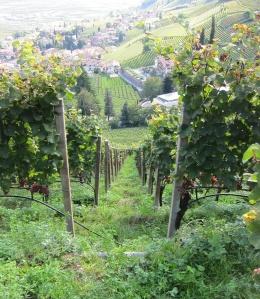 Photo 3 - slope w: Gewürzt