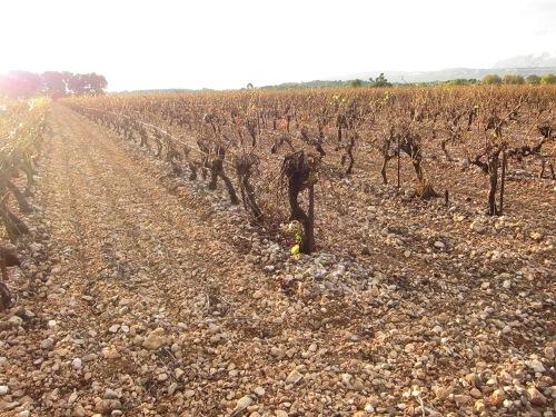 Photo 7 - Gravely vines