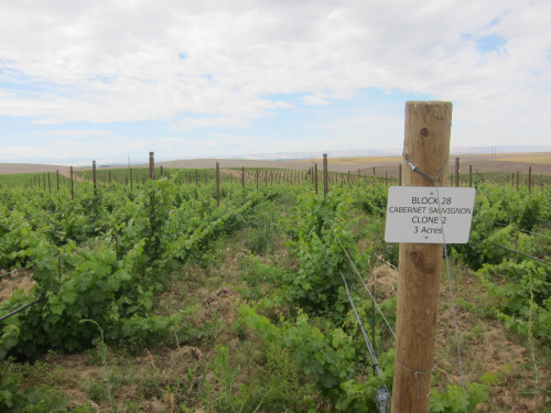 "New ""Eritage"" Vineyard in Walla Walla, WA"
