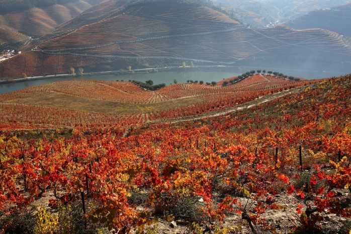terraced vineyards on the douro